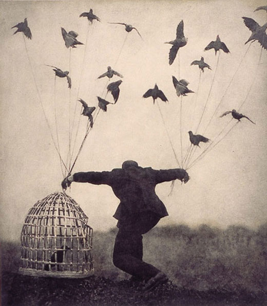freedom - birds - colivie