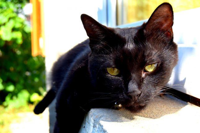 o pisica neagra acasa-001