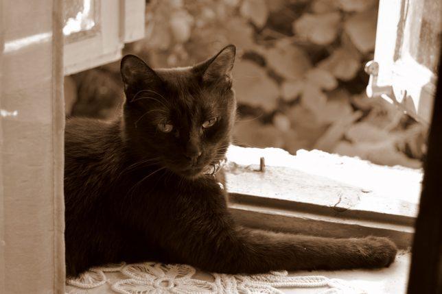 o pisica neagra acasa