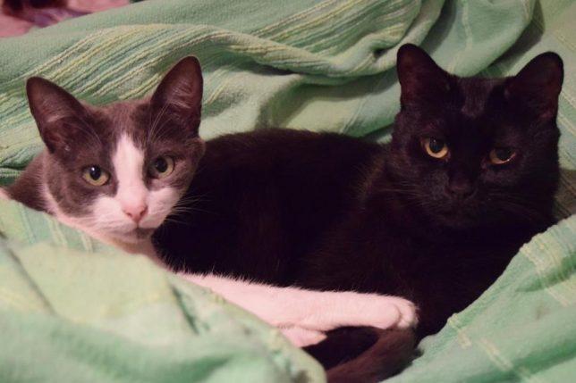 pisicile mele